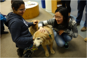 "2 Students in Kelvin Smith Library at Case Western Reserve enjoy ""doggy therapy,"" from Kelvin Smith Library's Facebook Page."